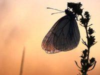 Kupu-kupu terbang malam tersesat di malam hari