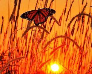 Kupu-kupu tersesat terbang di malam hari