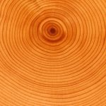 Menghitung Umur Pohon