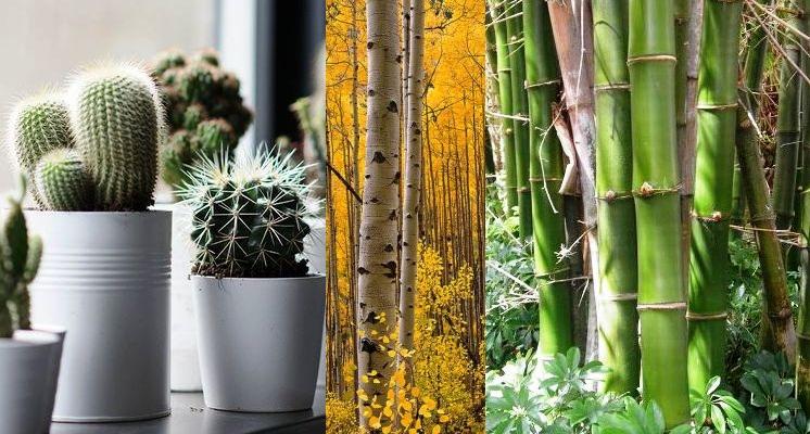 batang tumbuhan biologi