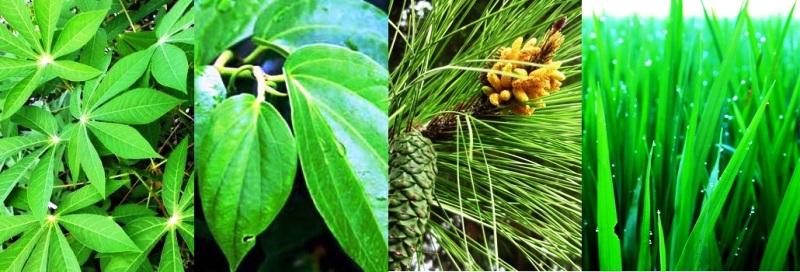 daun tumbuhan