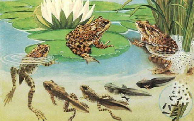 71 Koleksi Gambar Hewan Yang Mempunyai Metamorfosis Sempurna Terbaru