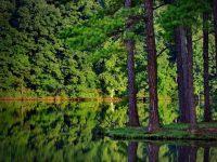 indahnya wisata hutan