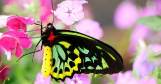 Kupu-kupu di Taman