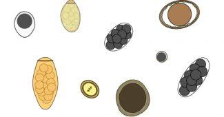 Parasitologi Tentang Semua Organisme Parasit Berbahaya