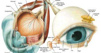 Sistem Indera Mata Manusia dan Gangguannya