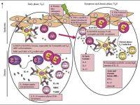 penyakit inflamasi Pengertian Asma Bronchial Dan Dermatitis Atopi