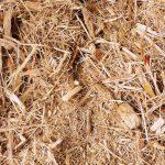 Manfaat Blotong (Limbah Pabrik Gula)
