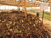 Limbah Tahu Padat Untuk Campuran Kompos