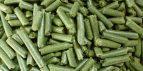 Potensi Besar Azolla Sebagai Pakan Organik Peternakan