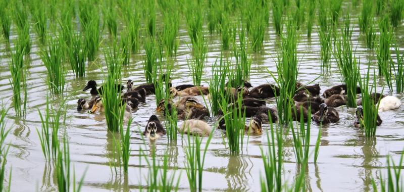 Peternakan Pakan Organik