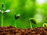 Pupuk Nitrogen ntuk Pengetahuan Para Petani Indonesia