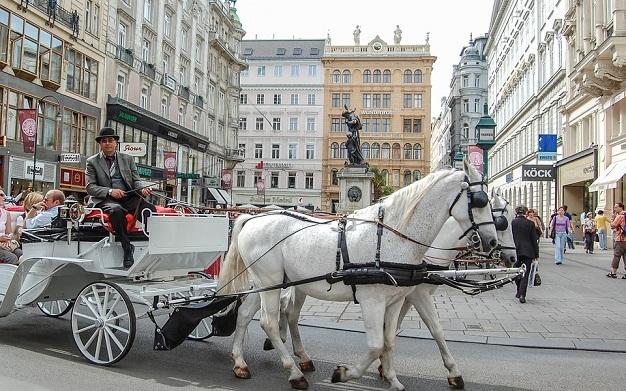 Lipizzaner Horses vienna Austria