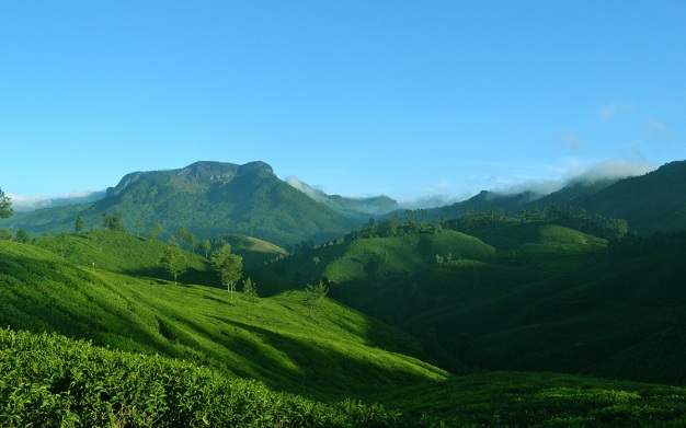 munnar kerala india tea plantation